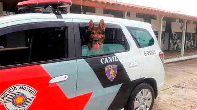 cão de guarda polícia militar